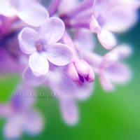 Soft Whispering by onixa