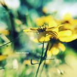 mixture of magic by onixa