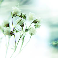 Fragile Elements by onixa