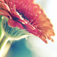 .: Never Ending Dream :. by onixa