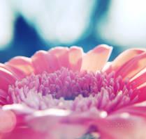 .: Never Ending Love :. by onixa