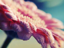 Dream Catcher by onixa