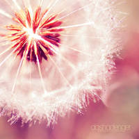 .: Crystal Light :. by onixa
