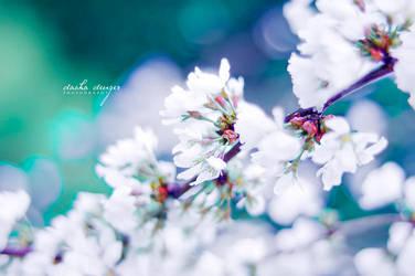 Fresh Blossoms by onixa