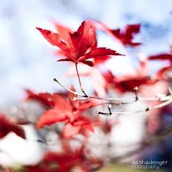Red Fiever by onixa
