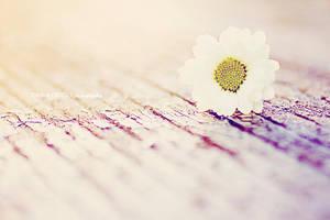 daisies, daisies, daisies by onixa