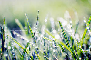 : sparkling grass : by onixa