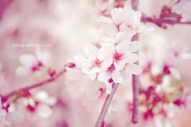 Sweet Cherry by onixa