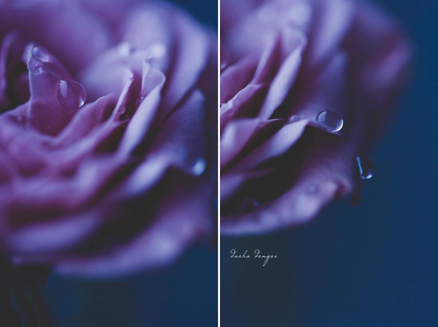 Twilight   Midnight by onixa