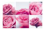 Fresh Blush by onixa
