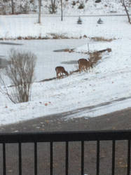 deer at my house by aliciamartin851
