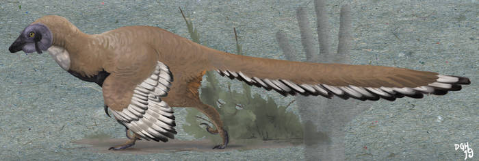 Jeholornis prima by DanneArt