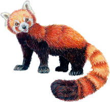 Red Panda by bumblefly