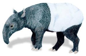 Tapir by bumblefly