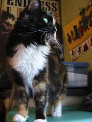 Jasmine, Elegant by bumblefly