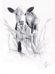 Little calf by Vindrea