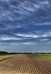 Potato row by grassiekuik