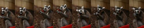 lemurs, lemurs, lemurs by la-niebla