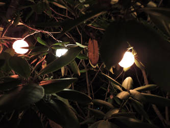 Hidden Lights by Slicenndice