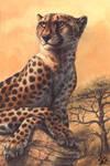 Cheetahs Never Prosper by screwbald