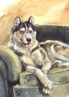 The Original Sofawolf by screwbald