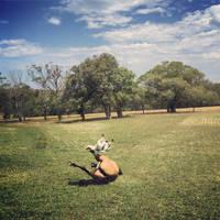 Breakdancing Horses by bgiffo