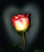 Just A Rose by PridesCrossing