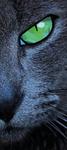 Cat Eye Geo Art #2 (Print Version) by emynemzz
