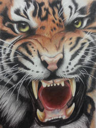 colored pencil tiger by mattmayers8