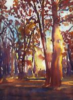 red forest by cihanpolat
