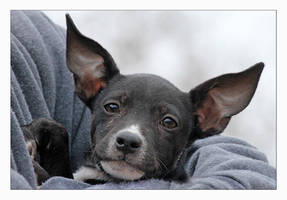 Ears by Goodbye-kitty975