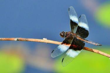 Blue Dragonfly by Goodbye-kitty975