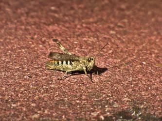 Grasshopper II by beholder0x100