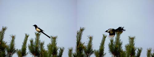 Bird In Motion II by beholder0x100