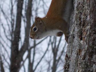 Hello Squirrelie by SHOTGUN12