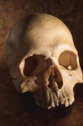 Skull 1 by liquiddreamsstock