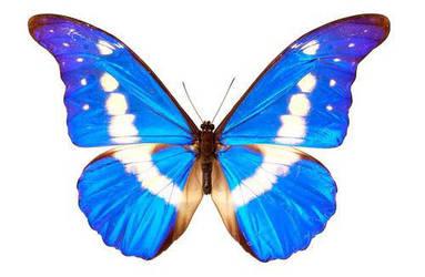 Butterfly 3 by liquiddreamsstock