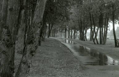 Where the path turns.. by Annqueru