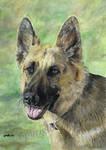 German Shepherd Dog by SRussellart