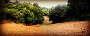 Nature Naturaleza by carrodeguas
