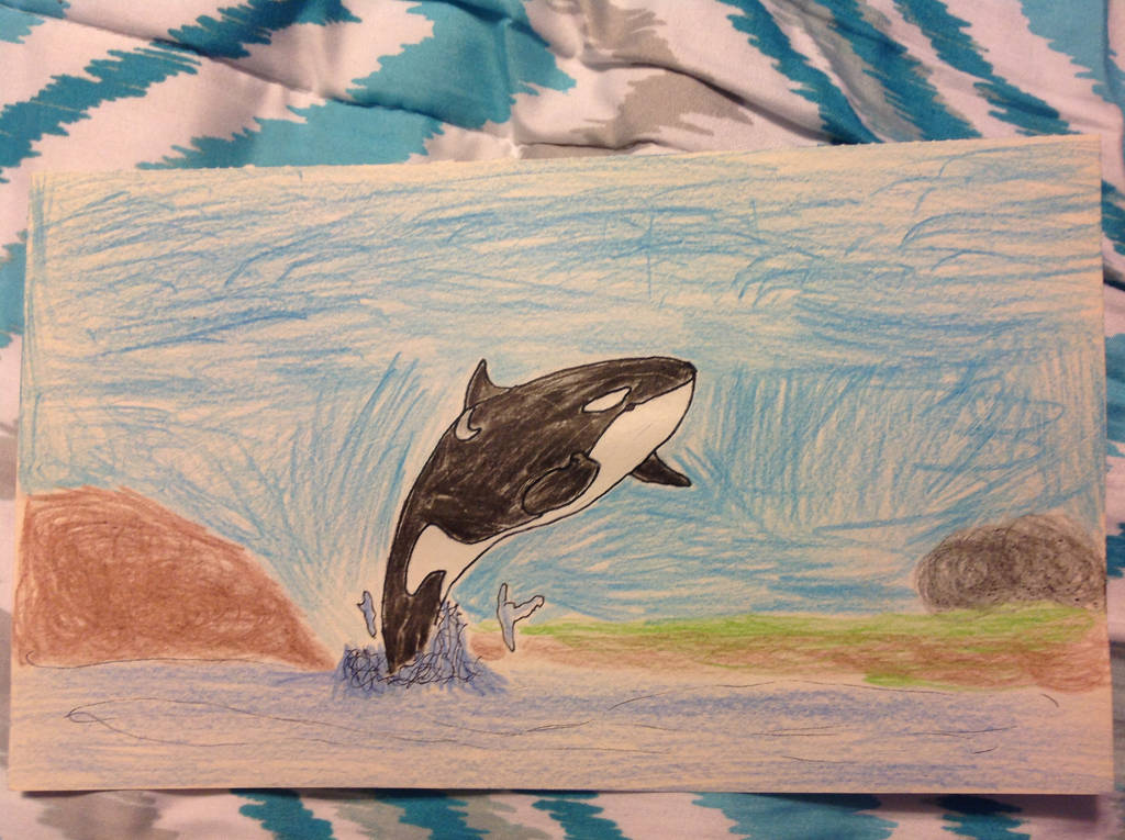 Orca breaching the water by PhatPandaPo23