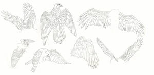 wings reference sheet by Ankaraven