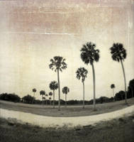 thirteen palms by sandpiper764
