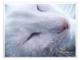 Topo durmiendo by acg3fly