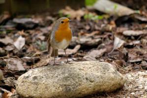 Hi,  I'm Robin by gwenoder