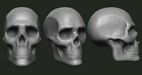 Skull Study 2 by GrevSev