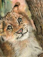 Lion Cub 3 by HendrikHermans