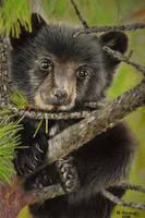 Baby Black Bear by HendrikHermans
