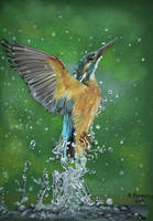 Kingfisher by HendrikHermans