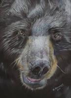 Bear by HendrikHermans